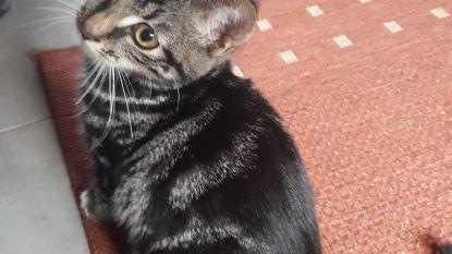 Politie zoekt getuigen of tips die kunnen leiden naar dierenbeul die kat aan boom hing