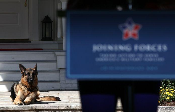 Biden's hond Champ.