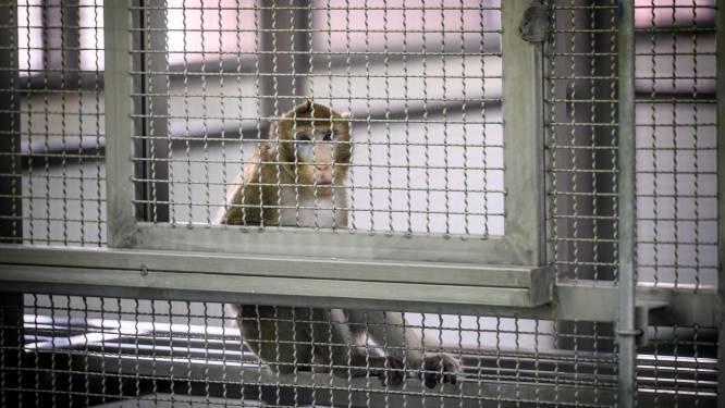 NASA euthanaseerde 27 proefdieren op één dag tijd