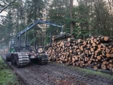 Zorgen over kaalslag in bos, Sociaal Groesbeek maant gemeente tot actie
