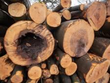 Worden er inderdaad te veel bomen gekapt?