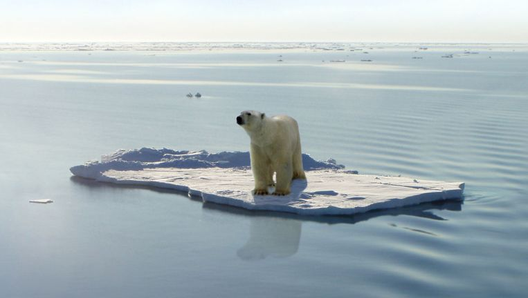 Een ijsbeer op een schots. Beeld Jan Will