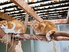 Oldenzaal zet in op educatie bij  vergroten van dierenwelzijn