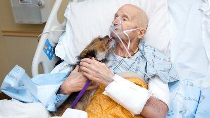 Laatste wens ingewilligd: Vietnamveteraan mag op sterfbed afscheid nemen van zijn beste vriend, hondje Patch