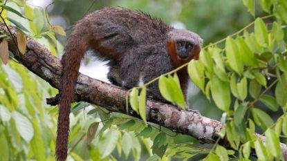 Klimaatverandering bedreigt helft planten- en diersoorten tegen eeuwwisseling