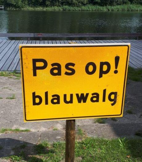 Schadelijke blauwalg in Snoekwiel Elshout