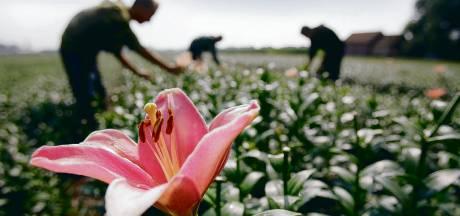 Bollentelers Hardenberg helpen zoeken naar duurzame teelt zonder duur gif