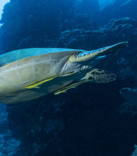 Oceanen warmen sneller op dan voorzien
