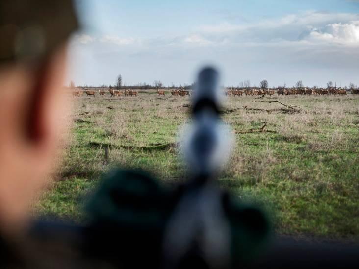 Afschot edelherten in Oostvaardersplassen blijft verboden