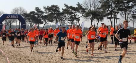 Stier of hardloper: wie heeft voorrang bij evenement in Maashorst?