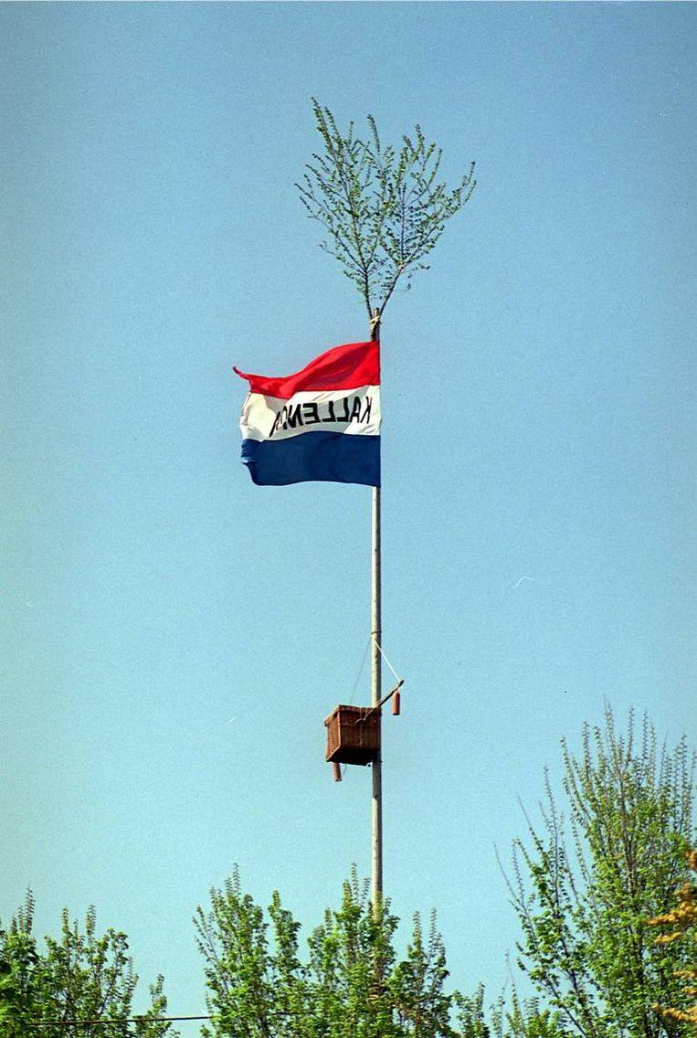 Haan in mast op 18 meter hoogte is volgens rechter geen dierenmishandeling