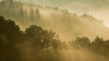 Bucketlist Ardennen: Ervaar de vrijheid van een eenzame boswandeling