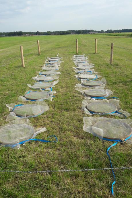 Beschermt de worm onze landbouwgronden tegen extreem weer?