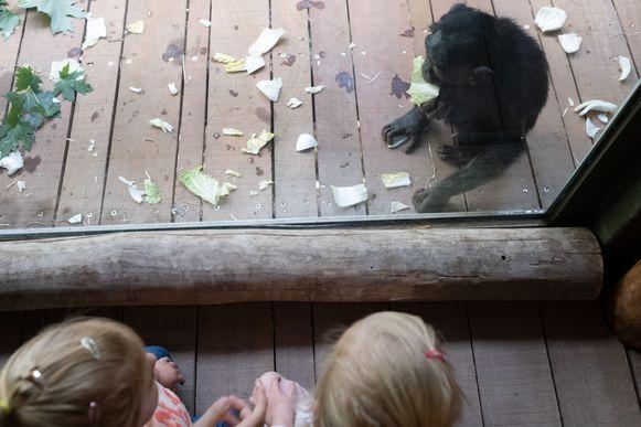 Via de ramen kan je vlak bij de bonobo's komen.