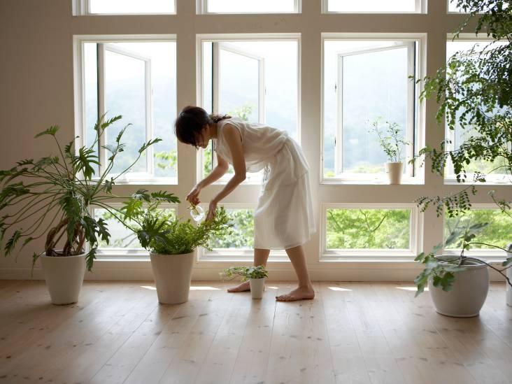 Geen tuin? In potten en bloembakken kun je toch tuinieren