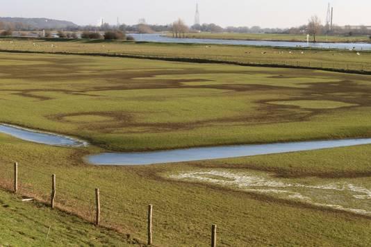 De uiterwaard langs de Grebbedijk.