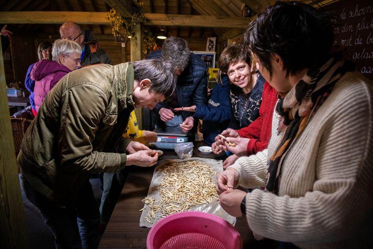 Met de oogst van de hopscheuten, start in Poperinge het nieuwe toeristische jaar.