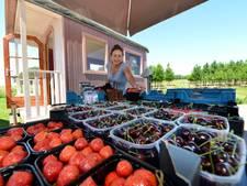 Gemeente wil Fruittuin in Kesteren niet legaliseren