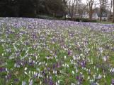 De lente is in het Oranjepark van Nunspeet al begonnen
