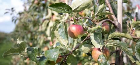 Hierdoor smaakt je appel zo zoet dit jaar