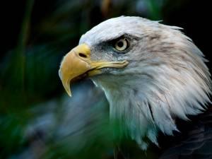 L'administration Trump détricote la loi protégeant les espèces menacées
