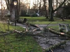 Wind maakt puinhoop van Waalwijks Wandelpark: 'Er zat zwam in'