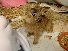 Dierenopvang: 'Laat jonge haasjes liggen'