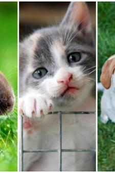 OPROEP | Heb jij een huisdier met één van deze drie namen? Stuur ons een foto!