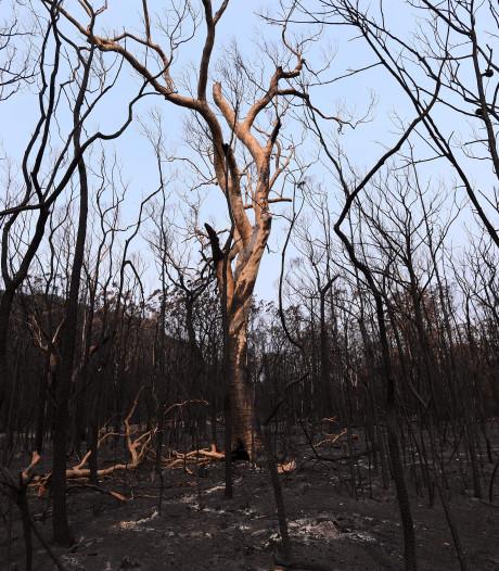 VN: 2019 op één na warmste jaar ooit, afgelopen decennium warmste ooit