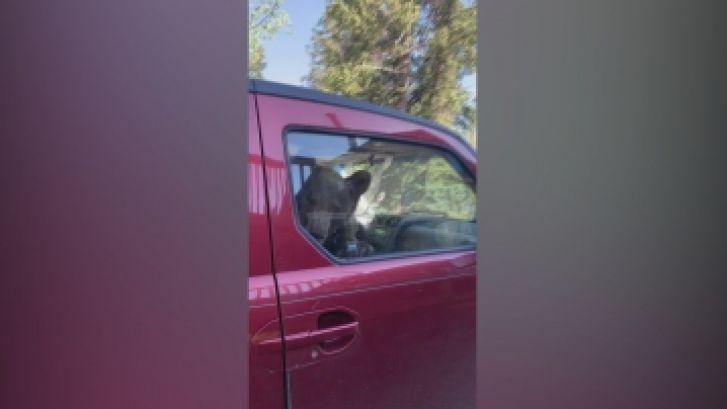 Elle retrouve un ours coincé à l'intérieur de sa voiture