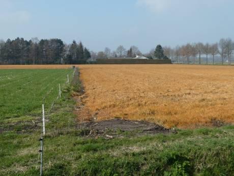 Velden kleuren weer geel in Meierij: 'bodemleven naar de knoppen' zeggen natuurjongens