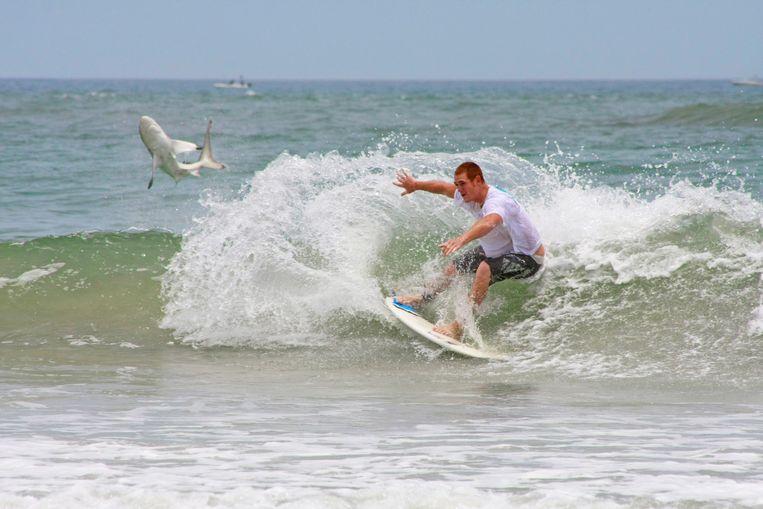Archieffoto. Een haai springt op, net achter een surfer aan New Smyrna Beach in Florida.