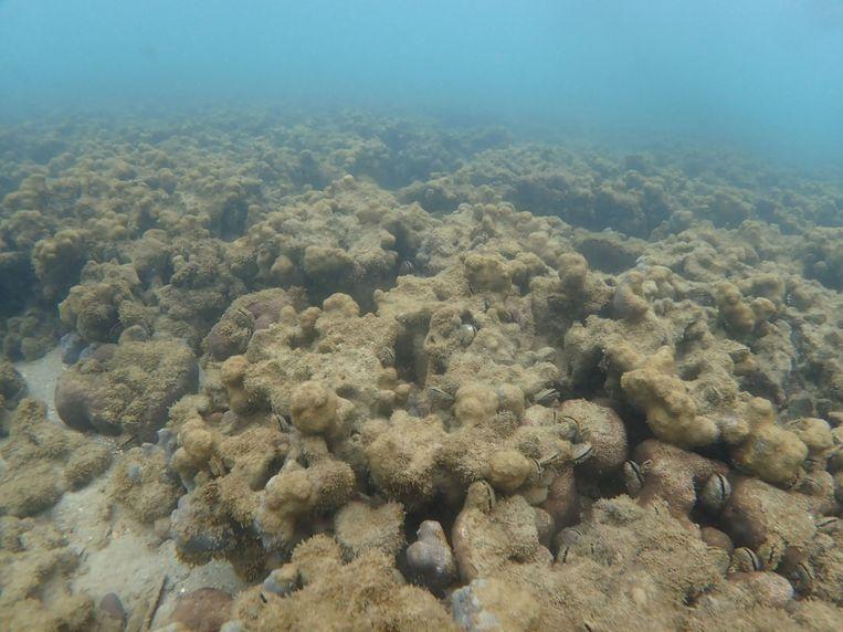 Dode koraalriffen in de baai van Kawahira van het Japanse eiland Ishigaki.
