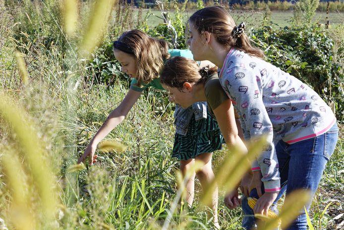 Kinderen van de Jeugdnatuurwacht Liempde op zoek naar sprinkhanen.