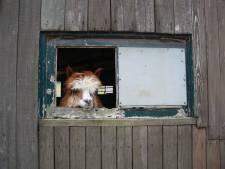 Legaliseren Bert's Animal Verhuur moet hoofdpijndossier sluiten