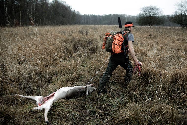 Jager Jakob Zunk sleept een geschoten hert weg.  Beeld Daniel Rosenthal / de Volkskrant