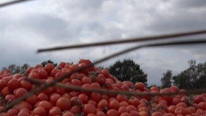 Tonnen groenten gestort op beschermde Brechtse Heide, burgemeester not amused