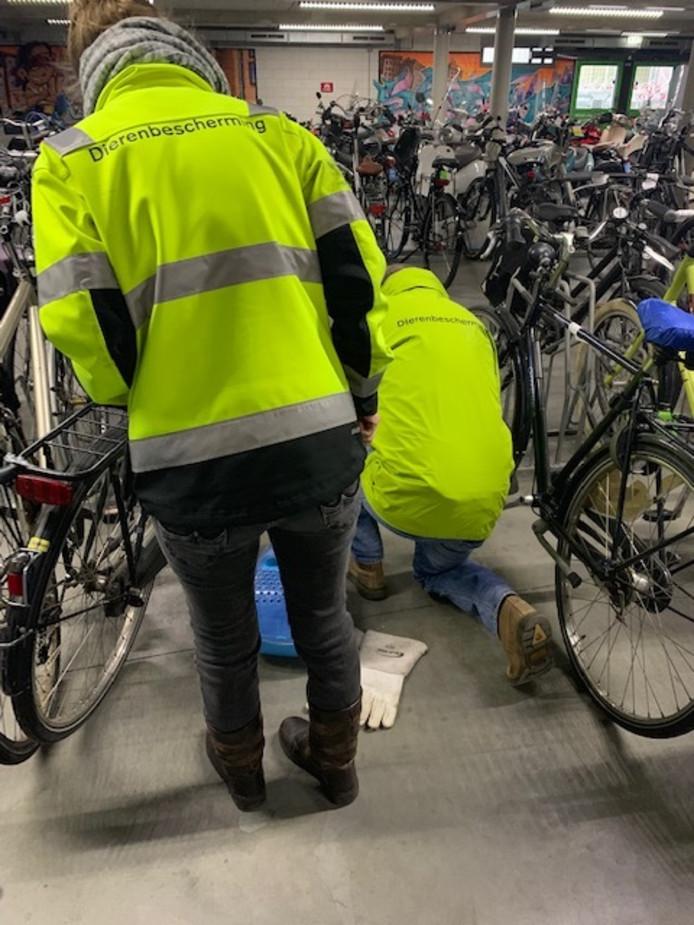 Slang in fietsenstalling in Breda