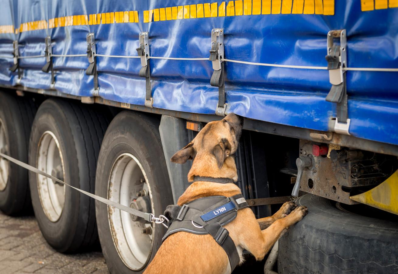 Foto ter illustratie: een speurhond van de marechaussee besnuffelt vrachtwagens op verstekelingen.