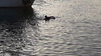 Drenkeling gered uit Montgomerydok, nadat hij zelf in het water is gesprongen