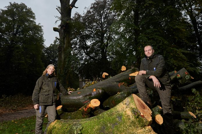 Boswachters Anouk Ballot en Guus Ebenau bij de resten van de circa 230 jaar oude rode beuk op landgoed Hackfort.