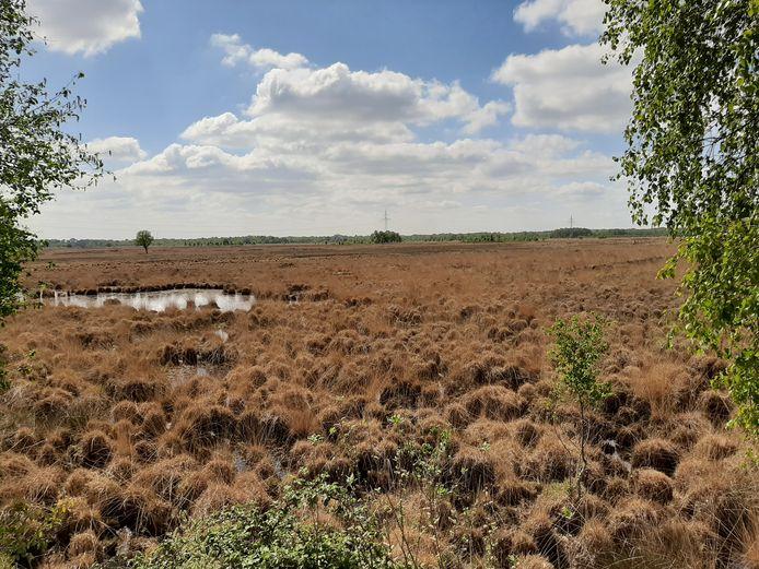 GroenLinks Hellendoorn en de PPW (Wierden) willen de Natura 2000-status voor het Wierdense Veld behouden.