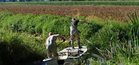 Boer Jelmer uit Oploo slaat alarm: Oploosche Molenbeek staat bijna droog