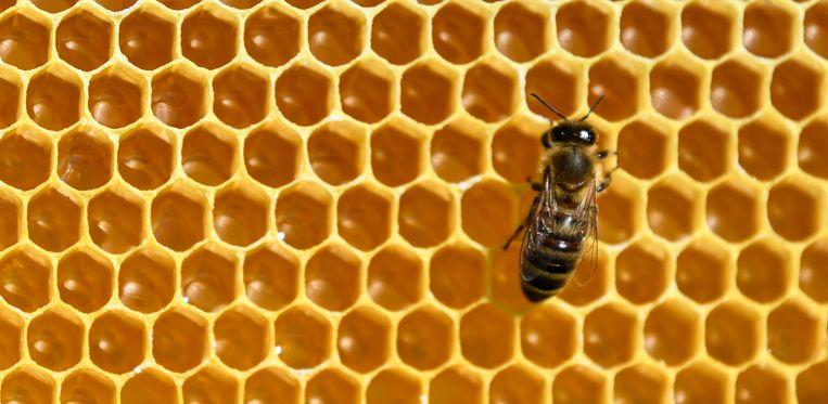 Experten van de 28 EU-lidstaten hebben hebben het licht op groen gezet voor een verbod op drie 'neonicotinoïden' of pesticiden die schadelijk zijn voor bijen. Het gaat om neurotoxische stoffen die het zenuwstelsel van de insecten aantasten.