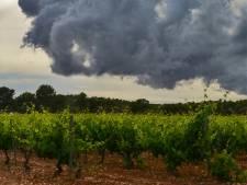 Minder alcohol bij nieuwe oogst Neleman Wijnen na noodweer in Valencia