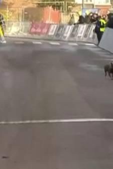 Un chien perturbe une course cycliste en Belgique