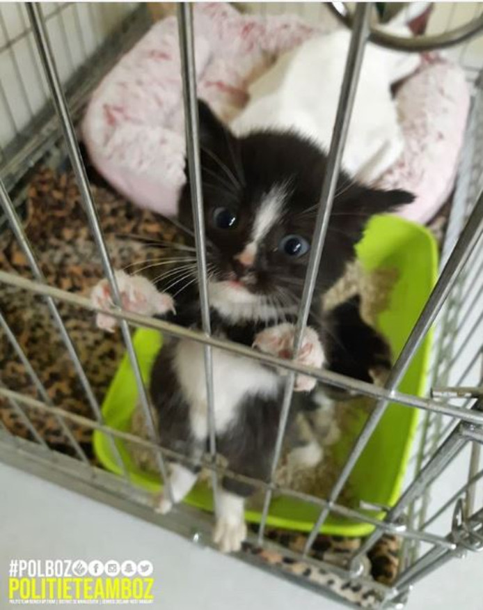 Een van de gevonden kittens.