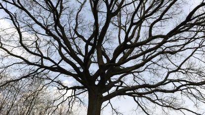 Fruitbomen leren snoeien met De Mark