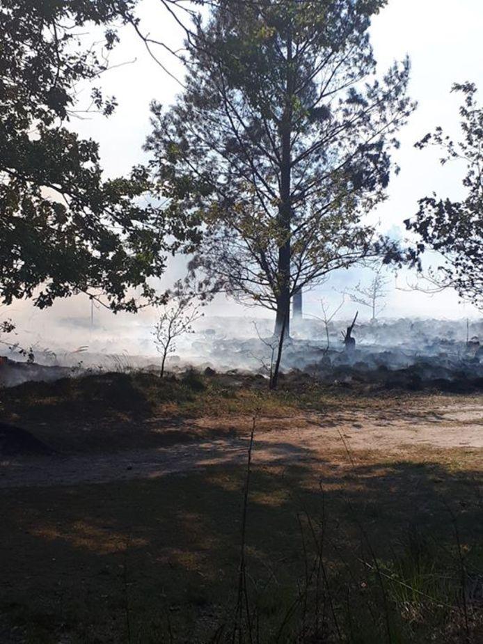 Op de Cartierheide bij Hapert heeft dinsdagmiddag opnieuw brand gewoed.
