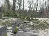 Boom richt ravage aan op begraafplaats Zaltbommel